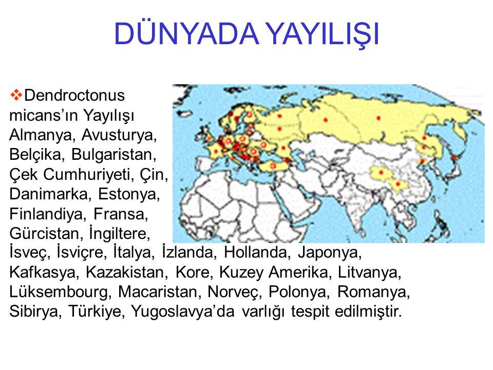 İsveç, İsviçre, İtalya, İzlanda, Hollanda, Japonya, Kafkasya, Kazakistan, Kore, Kuzey Amerika, Litvanya, Lüksembourg, Macaristan, Norveç, Polonya, Rom
