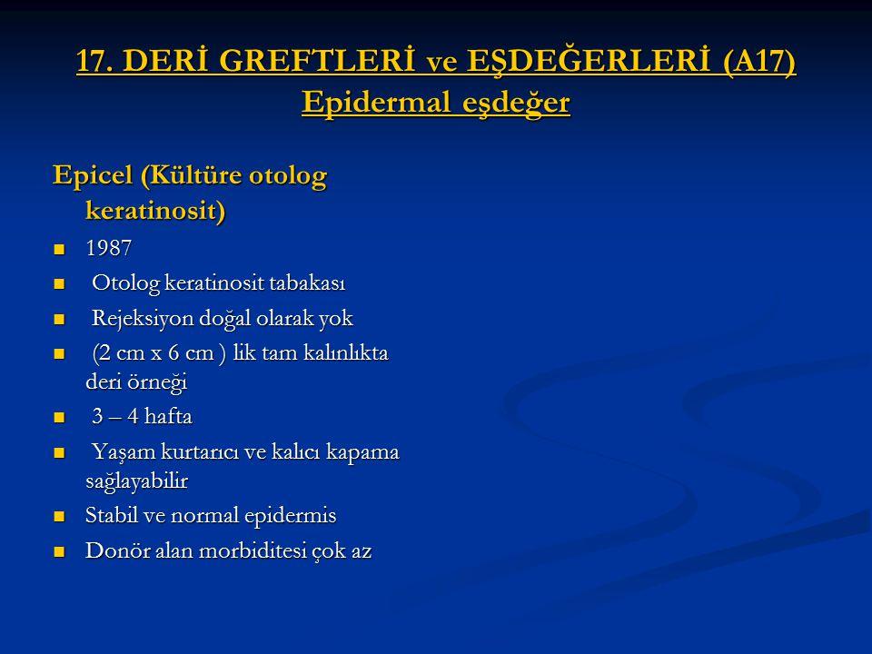 17. DERİ GREFTLERİ ve EŞDEĞERLERİ (A17) Epidermal eşdeğer Epicel (Kültüre otolog keratinosit) 1987 1987 Otolog keratinosit tabakası Otolog keratinosit