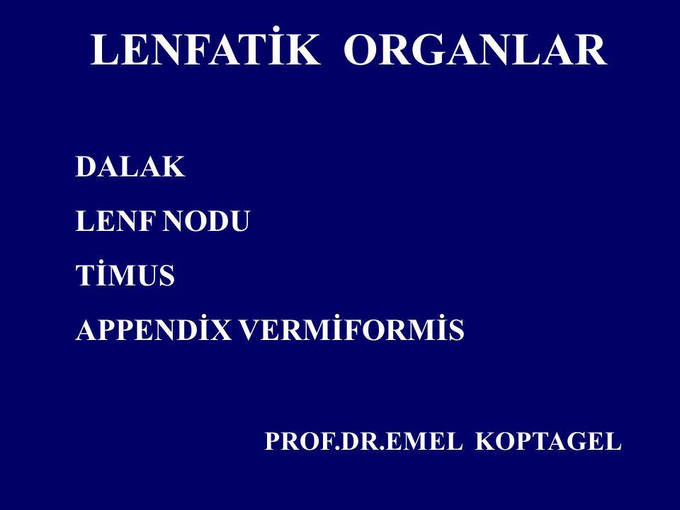 LENFATİK ORGANLAR DALAK LENF NODU TİMUS APPENDİX VERMİFORMİS PROF.DR.EMEL KOPTAGEL