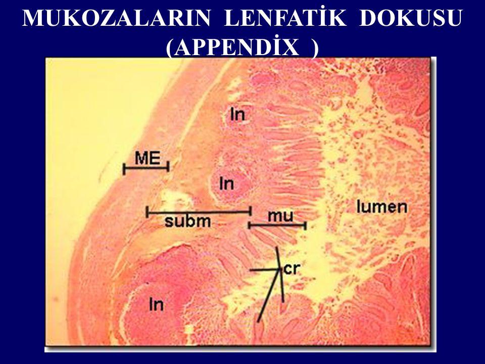 MUKOZALARIN LENFATİK DOKUSU (APPENDİX )