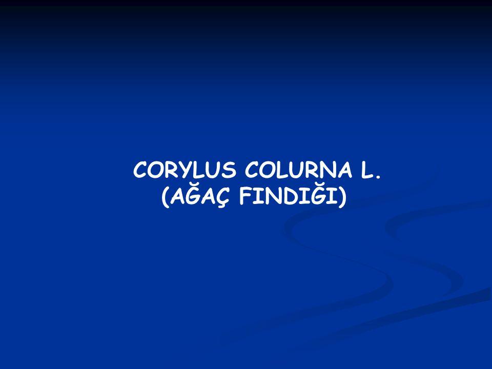 Sunumun İçeriği 1.1. Corylus colurna' nın bitki sistemati ğ indeki yeri 2.