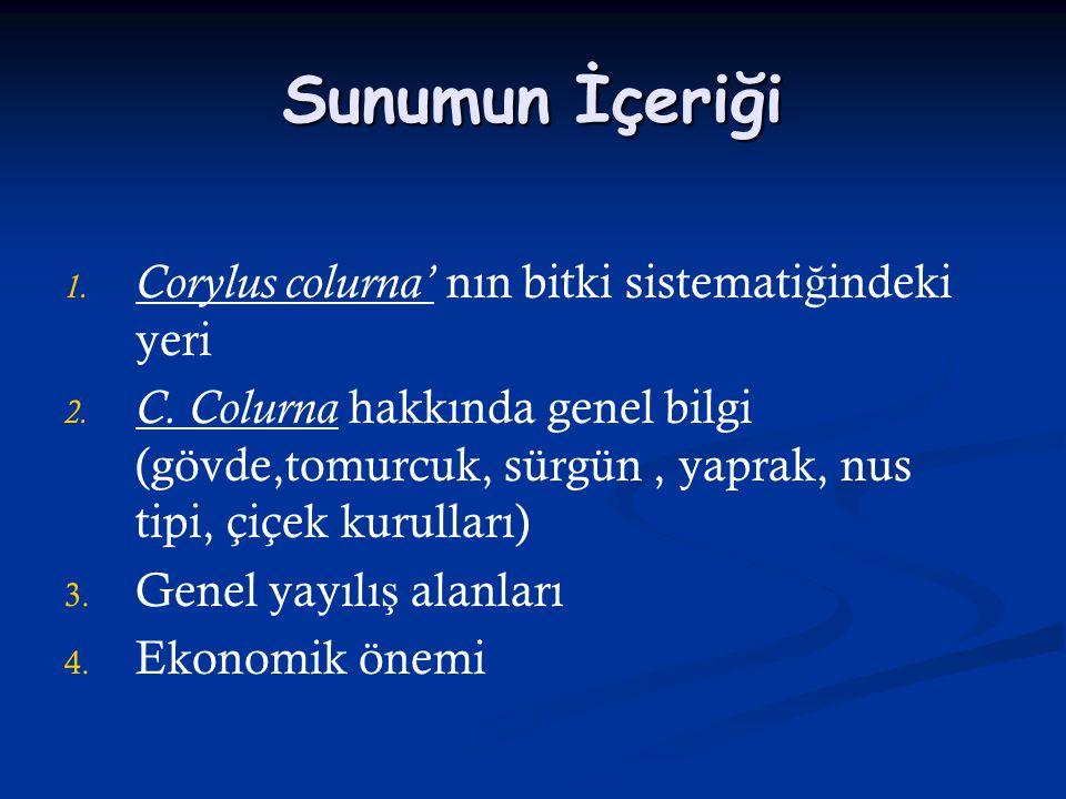 Sunumun İçeriği 1. 1. Corylus colurna' nın bitki sistemati ğ indeki yeri 2. 2. C. Colurna hakkında genel bilgi (gövde,tomurcuk, sürgün, yaprak, nus ti