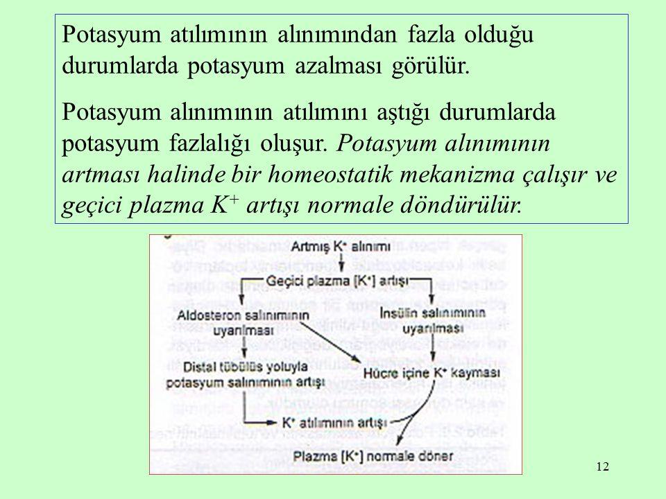 12 Potasyum atılımının alınımından fazla olduğu durumlarda potasyum azalması görülür. Potasyum alınımının atılımını aştığı durumlarda potasyum fazlalı