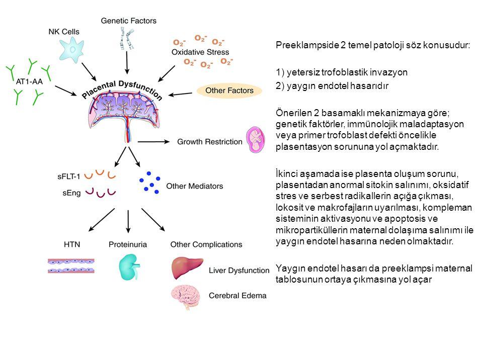 Preeklampside 2 temel patoloji söz konusudur: 1) yetersiz trofoblastik invazyon 2) yaygın endotel hasarıdır Önerilen 2 basamaklı mekanizmaya göre; genetik faktörler, immünolojik maladaptasyon veya primer trofoblast defekti öncelikle plasentasyon sorununa yol açmaktadır.