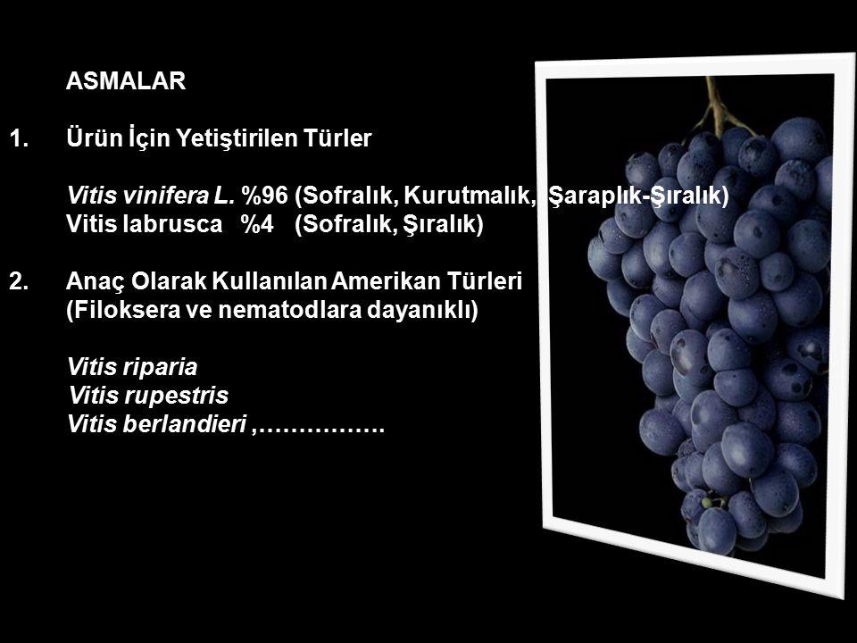 ASMALAR 1.Ürün İçin Yetiştirilen Türler Vitis vinifera L. %96 (Sofralık, Kurutmalık, Şaraplık-Şıralık) Vitis labrusca %4 (Sofralık, Şıralık) 2.Anaç Ol