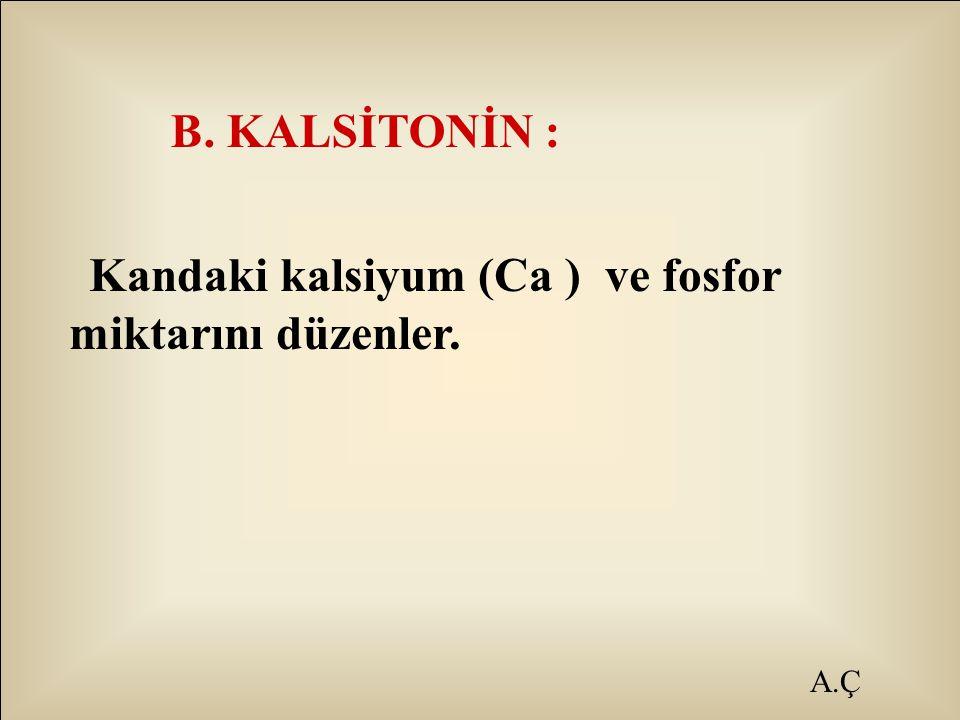 A.Ç B. KALSİTONİN : Kandaki kalsiyum (Ca ) ve fosfor miktarını düzenler.