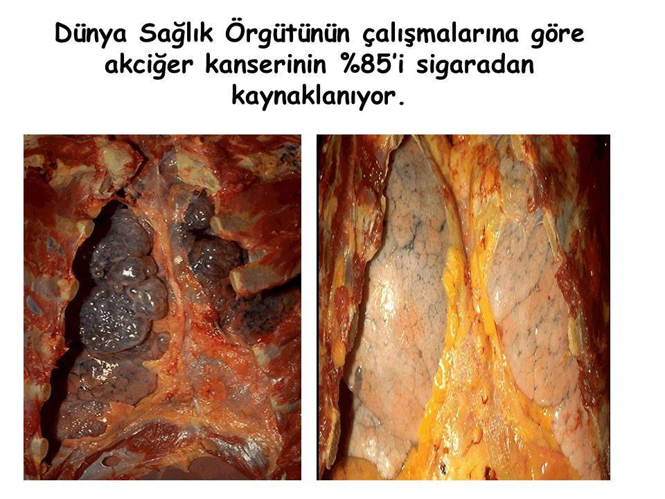 Vücudun herhangi bir organında kanser meydana gelmesi için tek bir hücrenin hasar görmesi yeterlidir. İŞTE BU KADAR KOLAY…