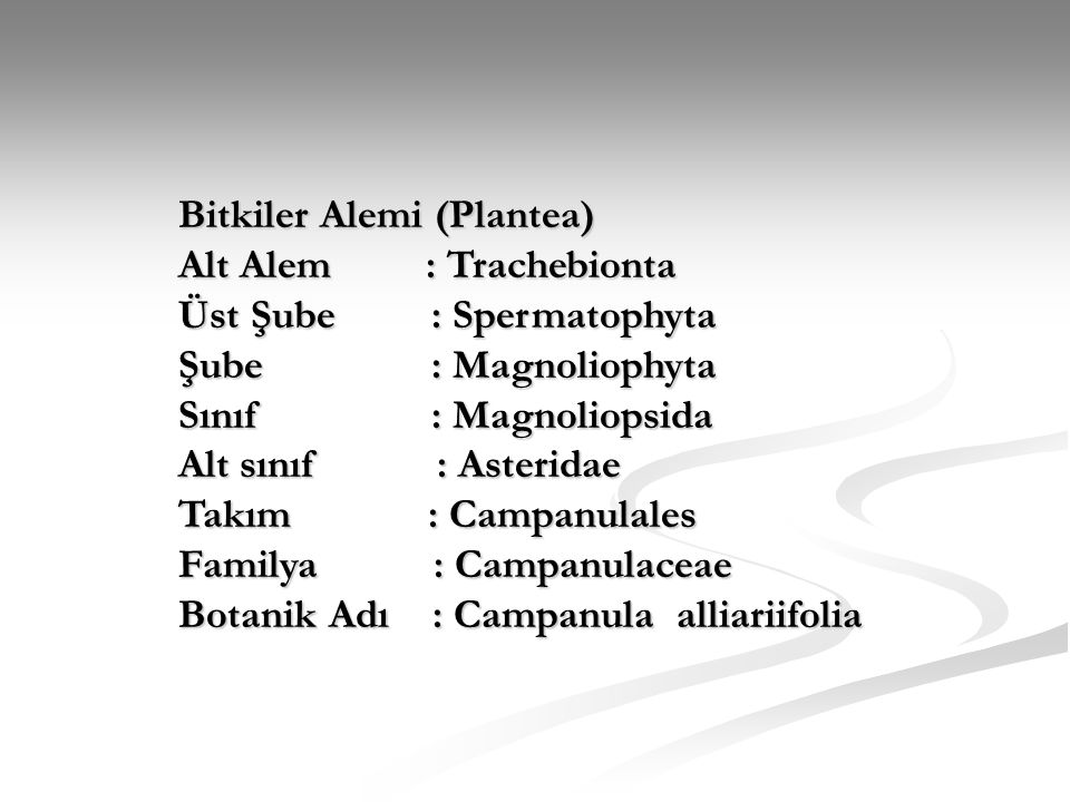 Bitkiler Alemi (Plantea) Alt Alem : Trachebionta Üst Şube : Spermatophyta Üst Şube : Spermatophyta Şube : Magnoliophyta Sınıf : Magnoliopsida Alt sını