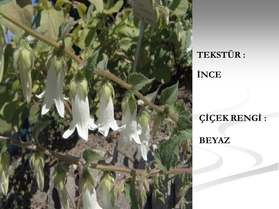 FORMU : Yaprakları 8 cm yürek şeklinde ve yaprak kenarı dişli ve gri tüylüdür.