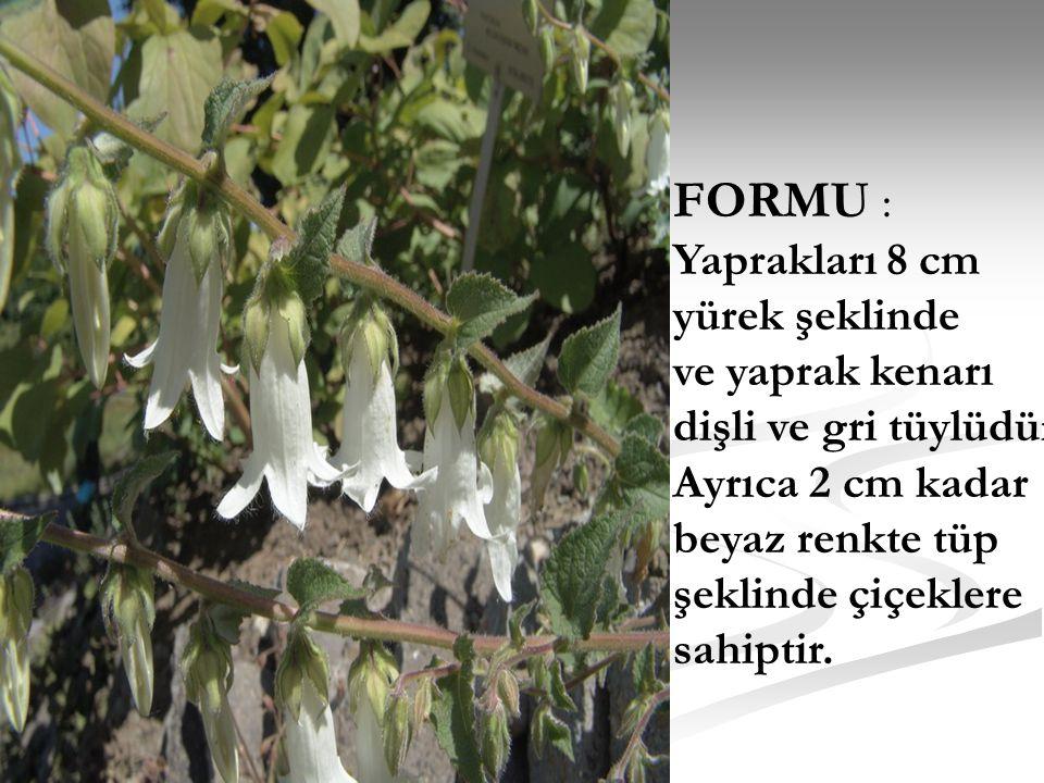 FORMU : Yaprakları 8 cm yürek şeklinde ve yaprak kenarı dişli ve gri tüylüdür. Ayrıca 2 cm kadar beyaz renkte tüp şeklinde çiçeklere sahiptir.