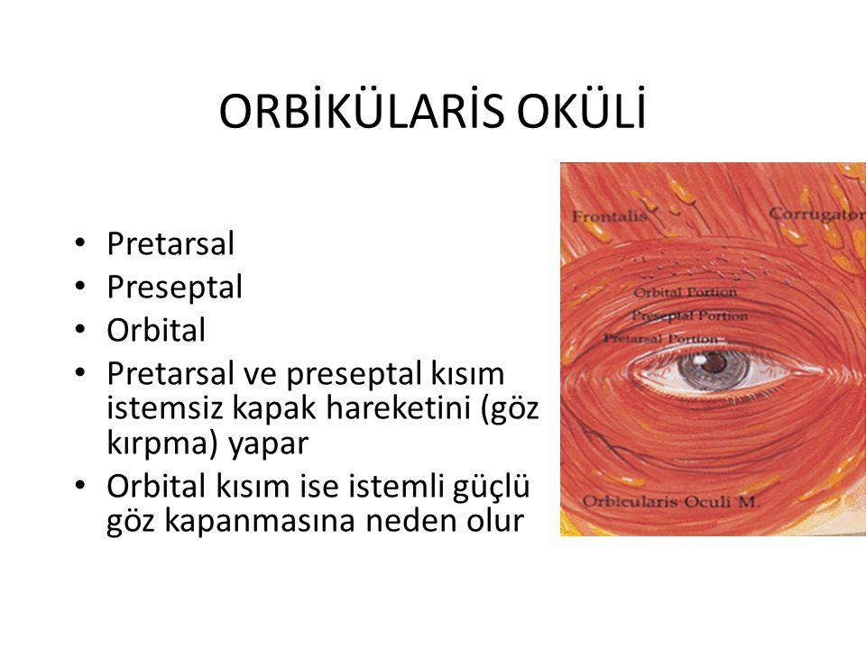 ORBİKÜLARİS OKÜLİ Pretarsal Preseptal Orbital Pretarsal ve preseptal kısım istemsiz kapak hareketini (göz kırpma) yapar Orbital kısım ise istemli güçl
