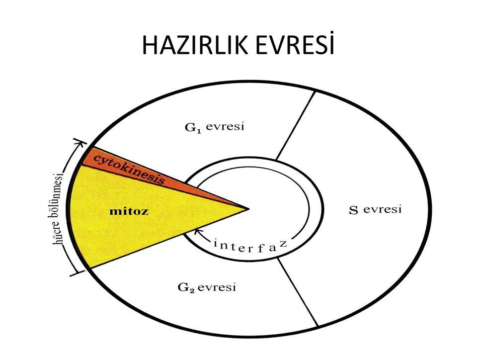 HAZIRLIK EVRESİ
