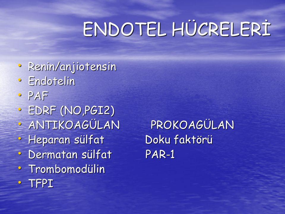 ENDOTEL HÜCRELERİ ENDOTEL HÜCRELERİ Renin/anjiotensin Renin/anjiotensin Endotelin Endotelin PAF PAF EDRF (NO,PGI2) EDRF (NO,PGI2) ANTIKOAGÜLAN PROKOAG