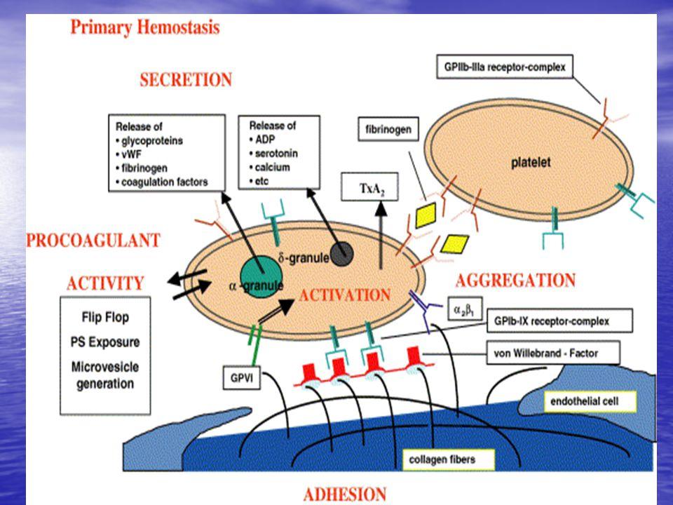 TANISAL TESTLER İkinci Basamak I Aktive protein C direnci/ FVL mutasyonu Aktive protein C direnci/ FVL mutasyonu Protrombin GA 20210 Protrombin GA 20210 Plazma protein C aktivitesi Plazma protein C aktivitesi S S antitrombin aktivitesi antitrombin aktivitesi homosistein düzeyi ( açlık ) homosistein düzeyi ( açlık ) Antikardiolipin antikorlar (IgM, IgG ) ve lupus antikoagülan Antikardiolipin antikorlar (IgM, IgG ) ve lupus antikoagülan FVIII düzeyleri FVIII düzeyleri