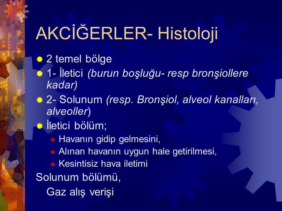 AKCİĞERLER- Histoloji  2 temel bölge  1- İletici (burun boşluğu- resp bronşiollere kadar)  2- Solunum (resp.