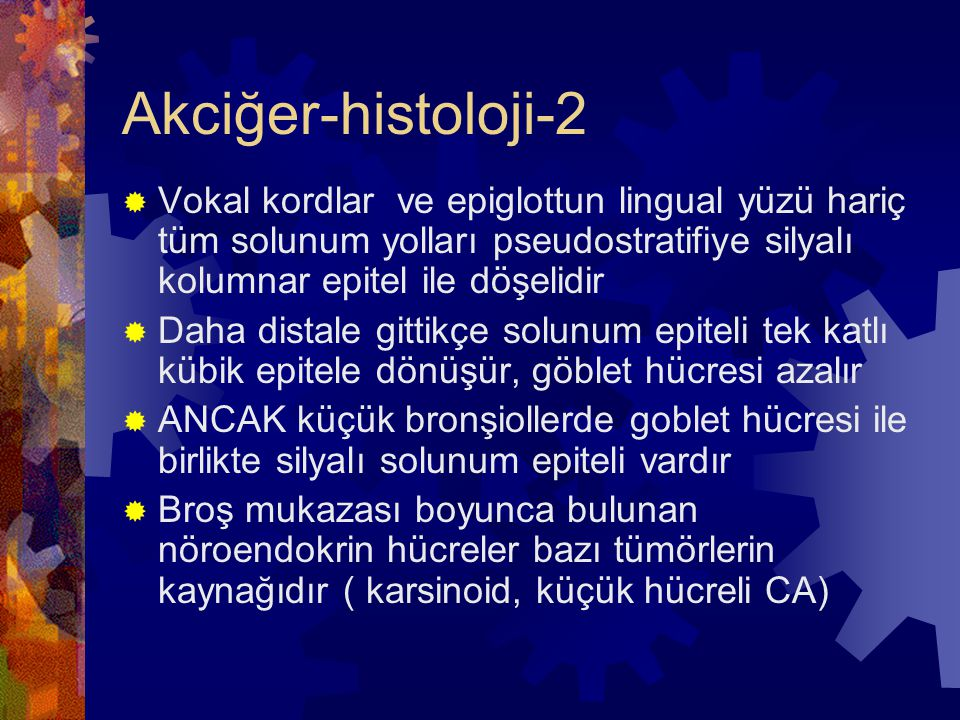 Akciğer-histoloji-3  Bronş ve bronşiol epitelinin ana hücreleri:  Bazal hücreler  Silyalı ve seröz hücreler  Klara hücreleri  Goblet hücreleri  Kultischisky hücreleri  Klara hücreleri ana sekretuar fonksiyonu olan hücrelerdir, bronşial zedelenmede kök hücre rolü vardır, D- PAS + sekretuar apikal granüller içerir