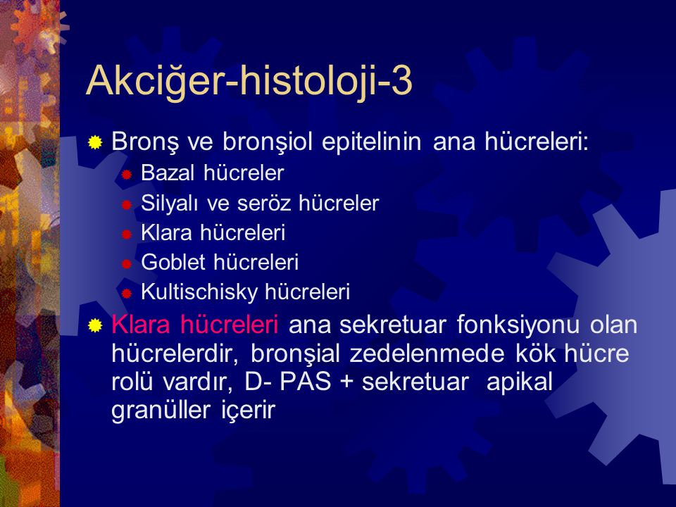 Akciğer-histoloji-4  Alveol duvarında sayısız Kohn porları vardır ve histopatolojisinde:  1- Kapiller endotel  2- Bazal membran ve çevreleyen interstisyel doku  ( elastik lif, kollajen,fibroblast, düz kas, mast hücresi, lenfosit)  3- Alveol epiteli: 2 tip epitel var  Tip I pnömositler (%95)  Tip II pnömositler ( iki yönden önemlidir, sürfaktanın ana kaynağıdır, alveol tamirinde temel hücredir)  4- Alveoler makrofajlar