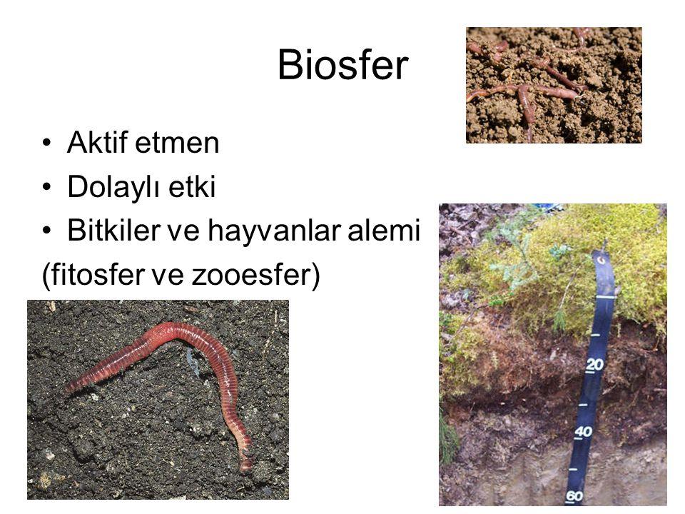 Biosfer Aktif etmen Dolaylı etki Bitkiler ve hayvanlar alemi (fitosfer ve zooesfer)