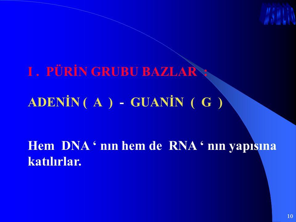 10 I. PÜRİN GRUBU BAZLAR : ADENİN ( A ) - GUANİN ( G ) Hem DNA ' nın hem de RNA ' nın yapısına katılırlar.