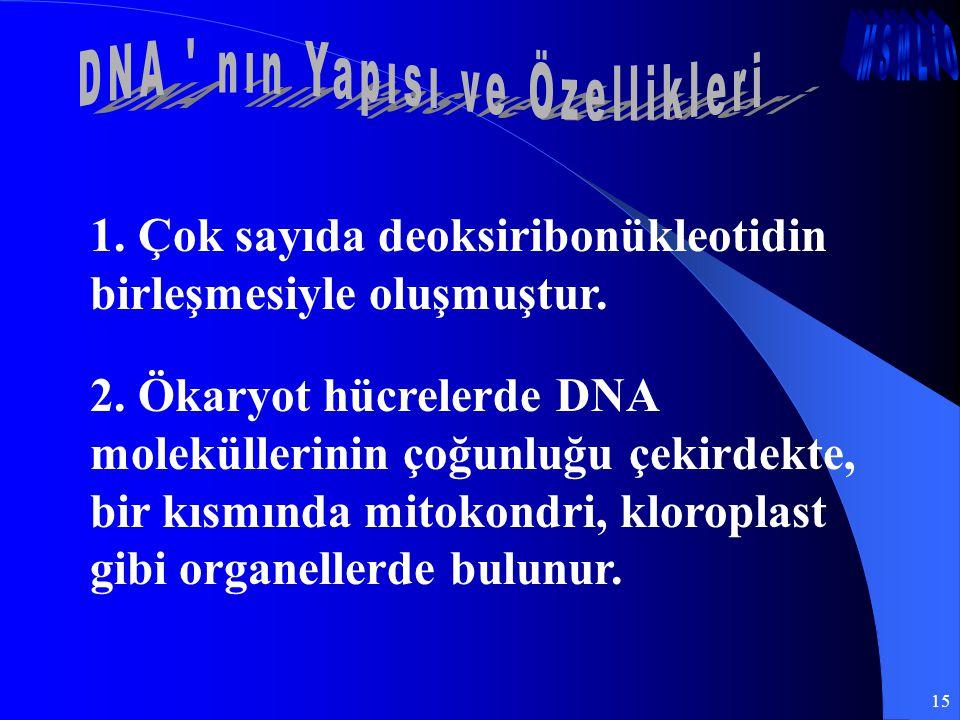 15 1. Çok sayıda deoksiribonükleotidin birleşmesiyle oluşmuştur. 2. Ökaryot hücrelerde DNA moleküllerinin çoğunluğu çekirdekte, bir kısmında mitokondr