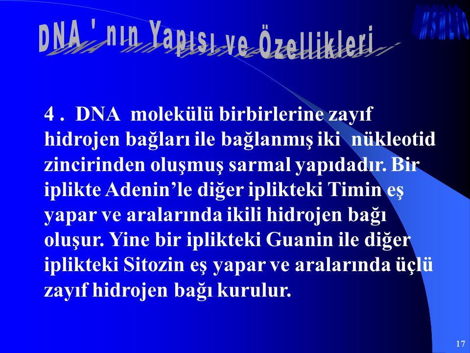 17 4. DNA molekülü birbirlerine zayıf hidrojen bağları ile bağlanmış iki nükleotid zincirinden oluşmuş sarmal yapıdadır. Bir iplikte Adenin'le diğer i