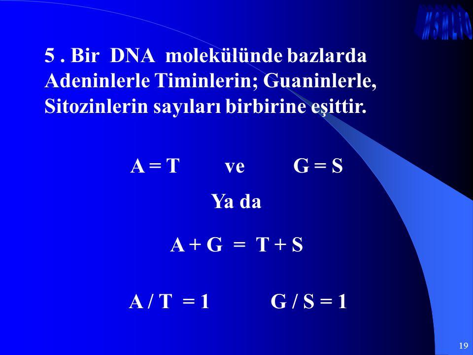 19 5. Bir DNA molekülünde bazlarda Adeninlerle Timinlerin; Guaninlerle, Sitozinlerin sayıları birbirine eşittir. A = T ve G = S Ya da A + G = T + S A