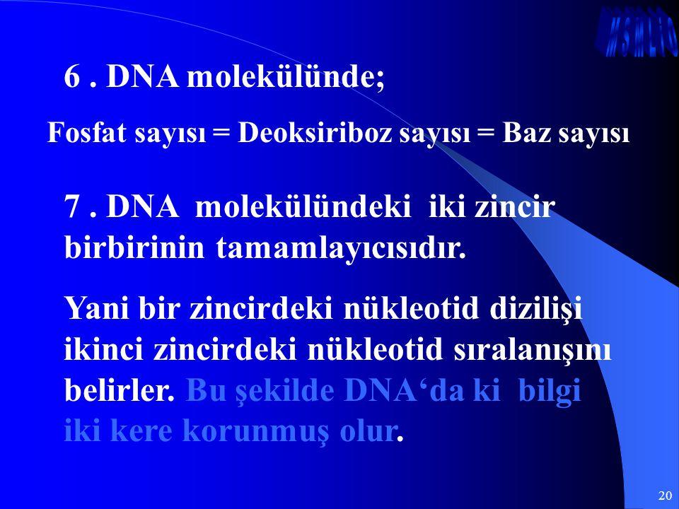 20 6. DNA molekülünde; Fosfat sayısı = Deoksiriboz sayısı = Baz sayısı 7. DNA molekülündeki iki zincir birbirinin tamamlayıcısıdır. Yani bir zincirdek