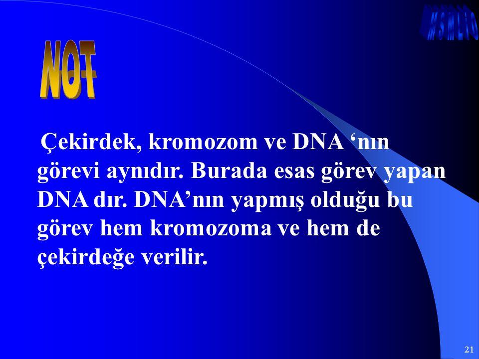 21 Çekirdek, kromozom ve DNA 'nın görevi aynıdır. Burada esas görev yapan DNA dır. DNA'nın yapmış olduğu bu görev hem kromozoma ve hem de çekirdeğe ve