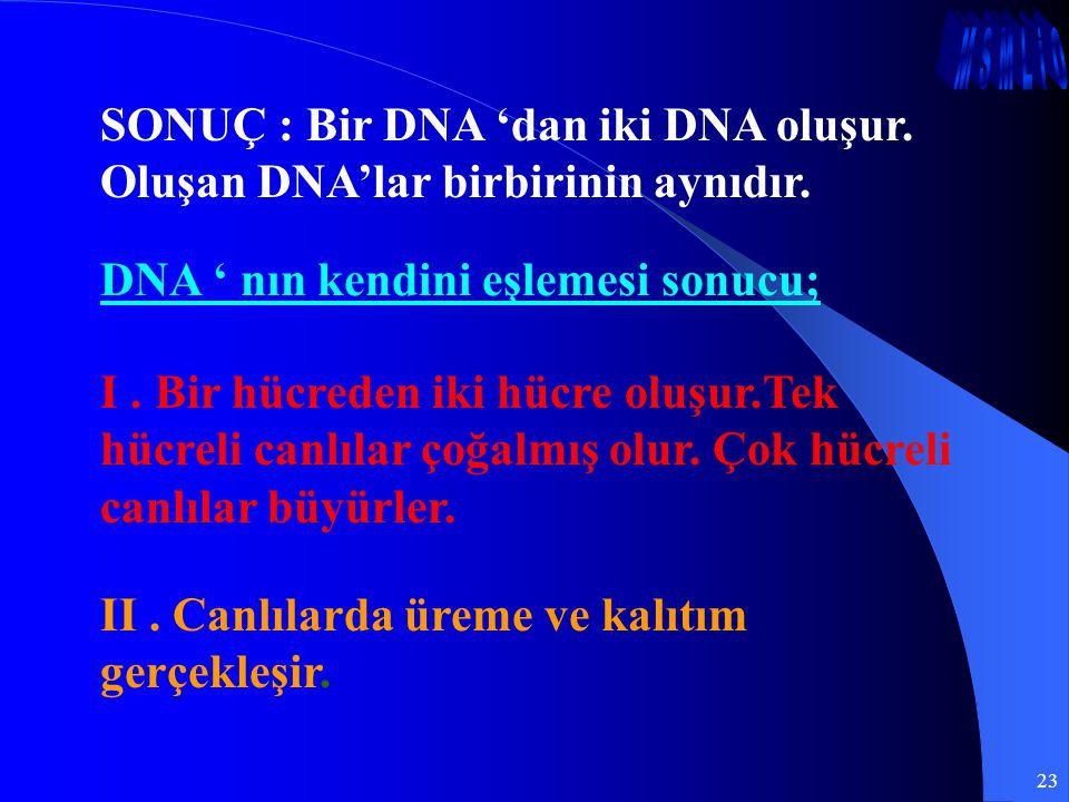 23 SONUÇ : Bir DNA 'dan iki DNA oluşur. Oluşan DNA'lar birbirinin aynıdır. DNA ' nın kendini eşlemesi sonucu; I. Bir hücreden iki hücre oluşur.Tek hüc