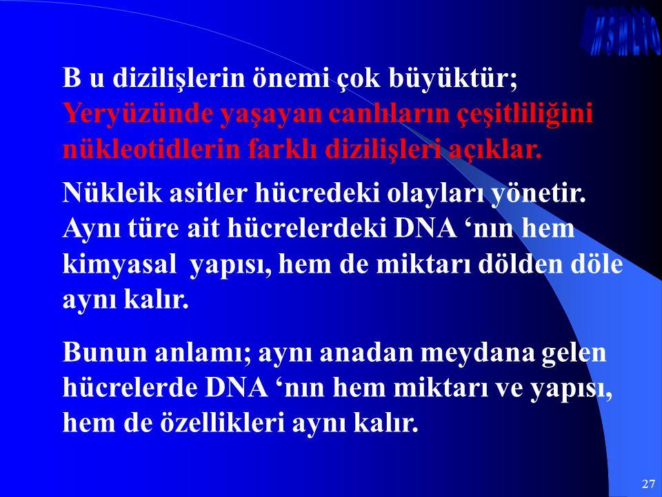 27 B u dizilişlerin önemi çok büyüktür; Yeryüzünde yaşayan canlıların çeşitliliğini nükleotidlerin farklı dizilişleri açıklar. Nükleik asitler hücrede