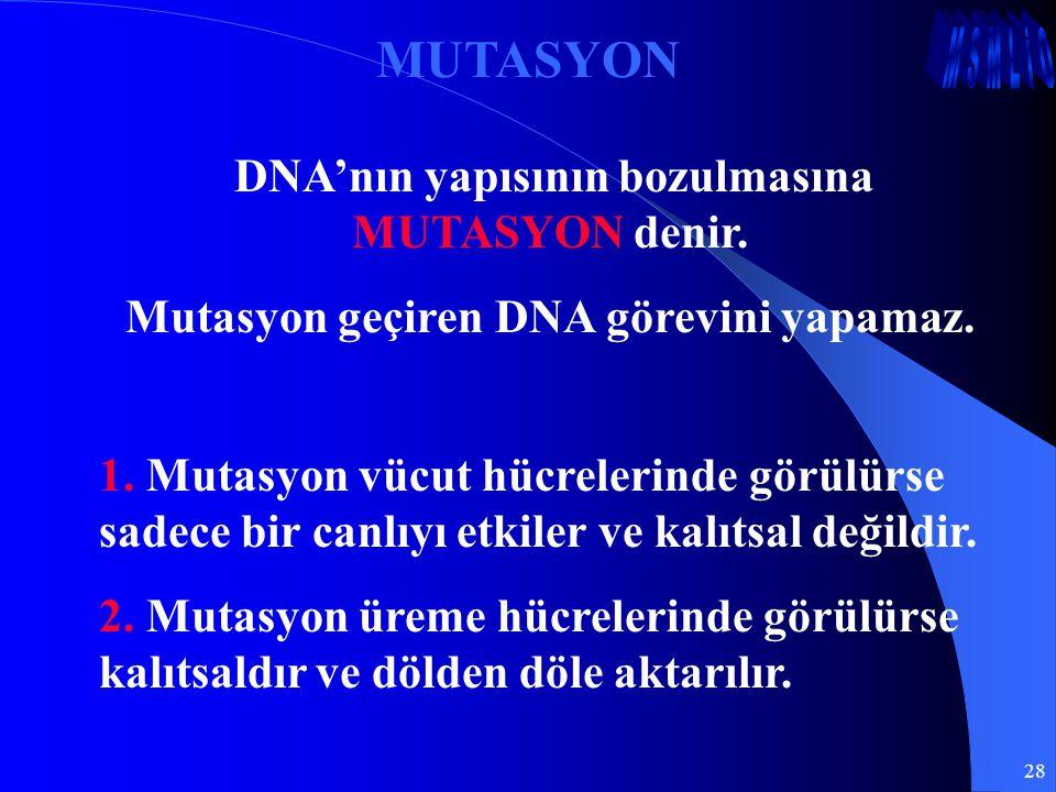 28 MUTASYON DNA'nın yapısının bozulmasına MUTASYON denir. Mutasyon geçiren DNA görevini yapamaz. 1. Mutasyon vücut hücrelerinde görülürse sadece bir c