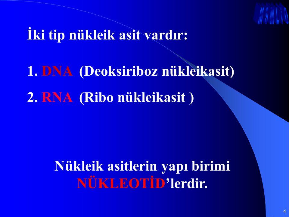 4 İki tip nükleik asit vardır: 1. DNA (Deoksiriboz nükleikasit) 2. RNA (Ribo nükleikasit ) Nükleik asitlerin yapı birimi NÜKLEOTİD'lerdir.