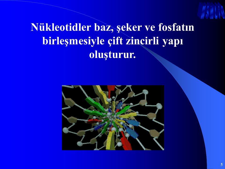 5 Nükleotidler baz, şeker ve fosfatın birleşmesiyle çift zincirli yapı oluşturur.