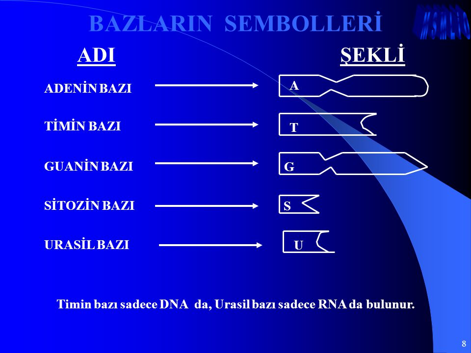 8 BAZLARIN SEMBOLLERİ ADIŞEKLİ Timin bazı sadece DNA da, Urasil bazı sadece RNA da bulunur. ADENİN BAZI A URASİL BAZI U SİTOZİN BAZI S GUANİN BAZI G T