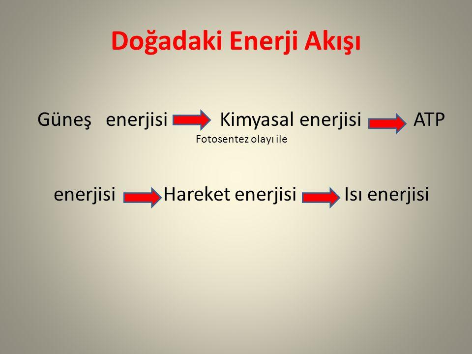 Doğadaki Enerji Akışı Güneş enerjisi Kimyasal enerjisi ATP Fotosentez olayı ile enerjisi Hareket enerjisi Isı enerjisi