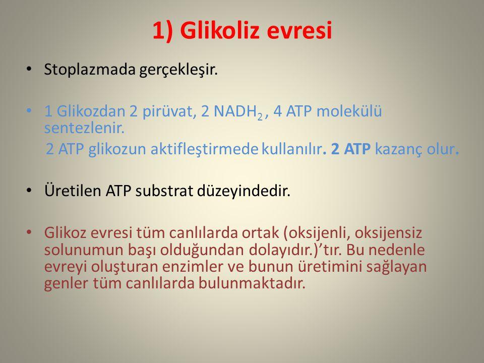 1) Glikoliz evresi Stoplazmada gerçekleşir. 1 Glikozdan 2 pirüvat, 2 NADH 2, 4 ATP molekülü sentezlenir. 2 ATP glikozun aktifleştirmede kullanılır. 2