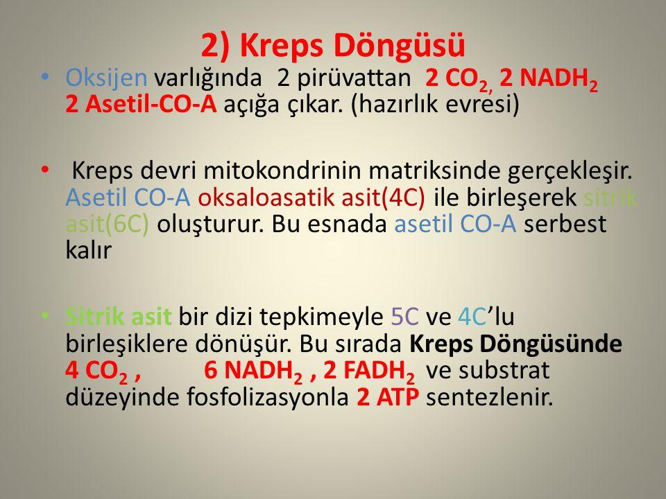 2) Kreps Döngüsü Oksijen varlığında 2 pirüvattan 2 CO 2, 2 NADH 2 2 Asetil-CO-A açığa çıkar. (hazırlık evresi) Kreps devri mitokondrinin matriksinde g