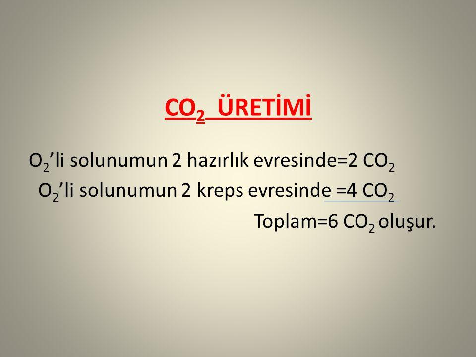 CO 2 ÜRETİMİ O 2 'li solunumun 2 hazırlık evresinde=2 CO 2 O 2 'li solunumun 2 kreps evresinde =4 CO 2 Toplam=6 CO 2 oluşur.
