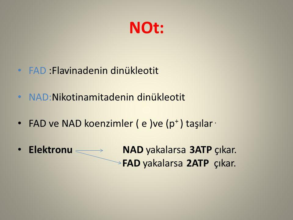NOt: FAD :Flavinadenin dinükleotit NAD:Nikotinamitadenin dinükleotit FAD ve NAD koenzimler ( e )ve (p + ) taşılar. Elektronu NAD yakalarsa 3ATP çıkar.