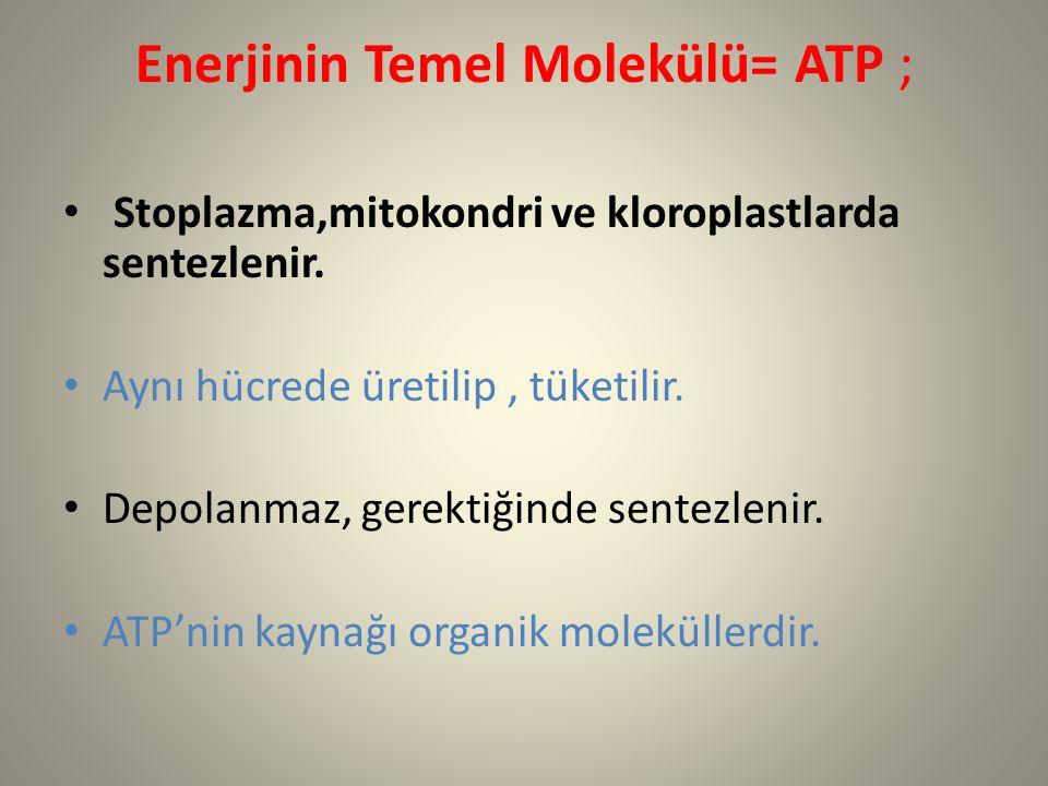 Enerjinin Temel Molekülü= ATP ; Stoplazma,mitokondri ve kloroplastlarda sentezlenir. Aynı hücrede üretilip, tüketilir. Depolanmaz, gerektiğinde sentez