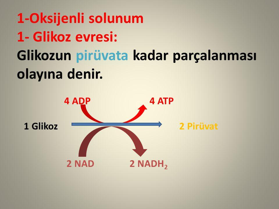 1-Oksijenli solunum 1- Glikoz evresi: Glikozun pirüvata kadar parçalanması olayına denir. 4 ADP 4 ATP 1 Glikoz 2 Pirüvat 2 NAD 2 NADH 2