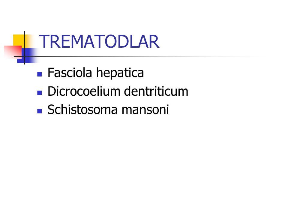 TREMATODLAR Fasciola hepatica Dicrocoelium dentriticum Schistosoma mansoni