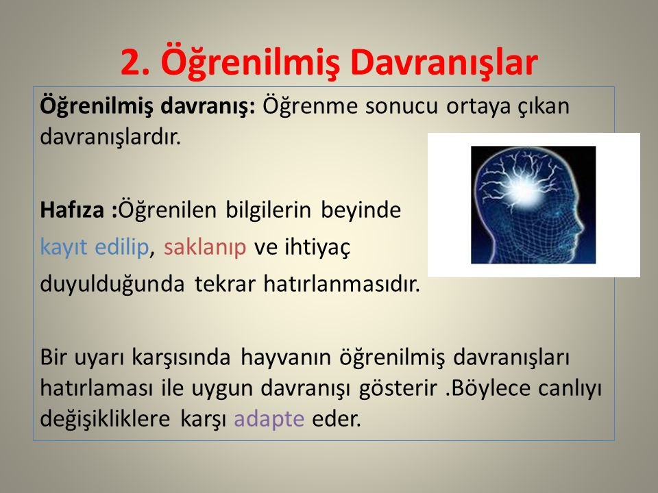 2. Öğrenilmiş Davranışlar Öğrenilmiş davranış: Öğrenme sonucu ortaya çıkan davranışlardır. Hafıza :Öğrenilen bilgilerin beyinde kayıt edilip, saklanıp