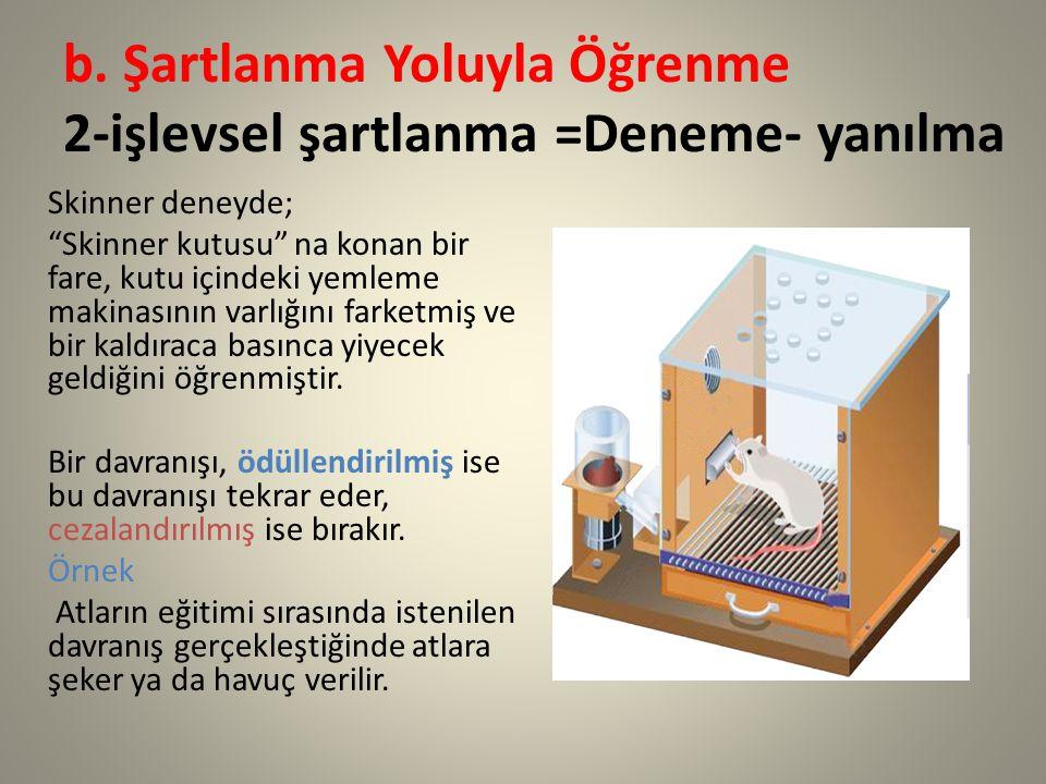 """b. Şartlanma Yoluyla Öğrenme 2-işlevsel şartlanma =Deneme- yanılma Skinner deneyde; """"Skinner kutusu"""" na konan bir fare, kutu içindeki yemleme makinası"""