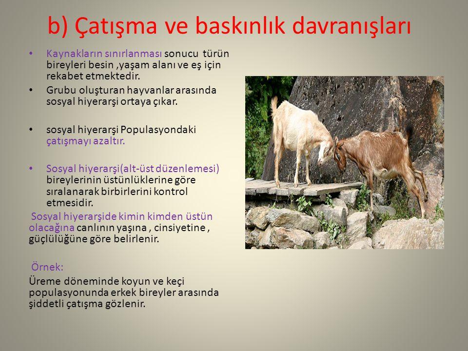 b) Çatışma ve baskınlık davranışları Kaynakların sınırlanması sonucu türün bireyleri besin,yaşam alanı ve eş için rekabet etmektedir. Grubu oluşturan