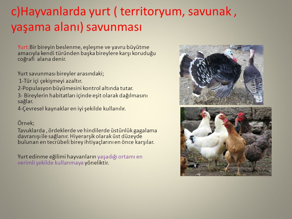 c)Hayvanlarda yurt ( territoryum, savunak, yaşama alanı) savunması Yurt:Bir bireyin beslenme, eşleşme ve yavru büyütme amacıyla kendi türünden başka b