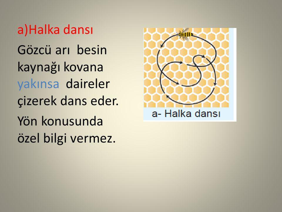a)Halka dansı Gözcü arı besin kaynağı kovana yakınsa daireler çizerek dans eder. Yön konusunda özel bilgi vermez.