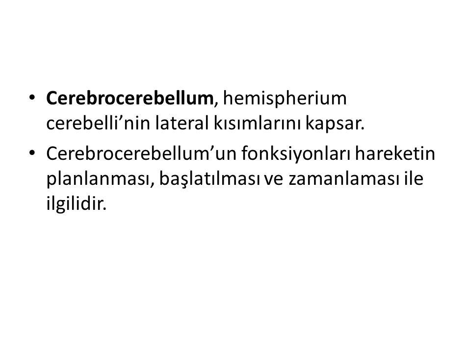 Cerebrocerebellum, hemispherium cerebelli'nin lateral kısımlarını kapsar. Cerebrocerebellum'un fonksiyonları hareketin planlanması, başlatılması ve za