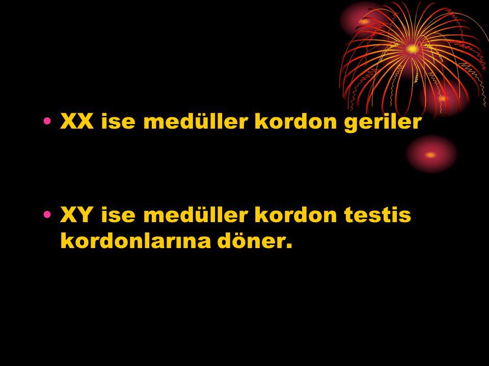XX ise medüller kordon geriler XY ise medüller kordon testis kordonlarına döner.