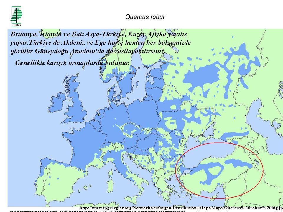 Britanya, İrlanda ve Batı Asya-Türkiye, Kuzey Afrika yayılış yapar.Türkiye de Akdeniz ve Ege hariç hemen her bölgemizde görülür Güneydoğu Anadolu'da d